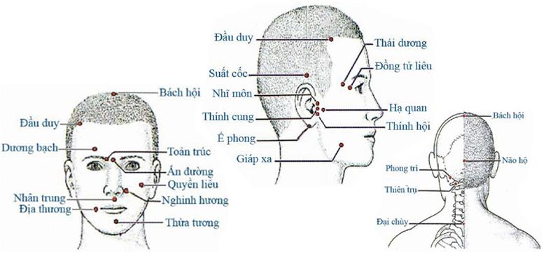 Các huyệt ở vùng đầu mặt cổ